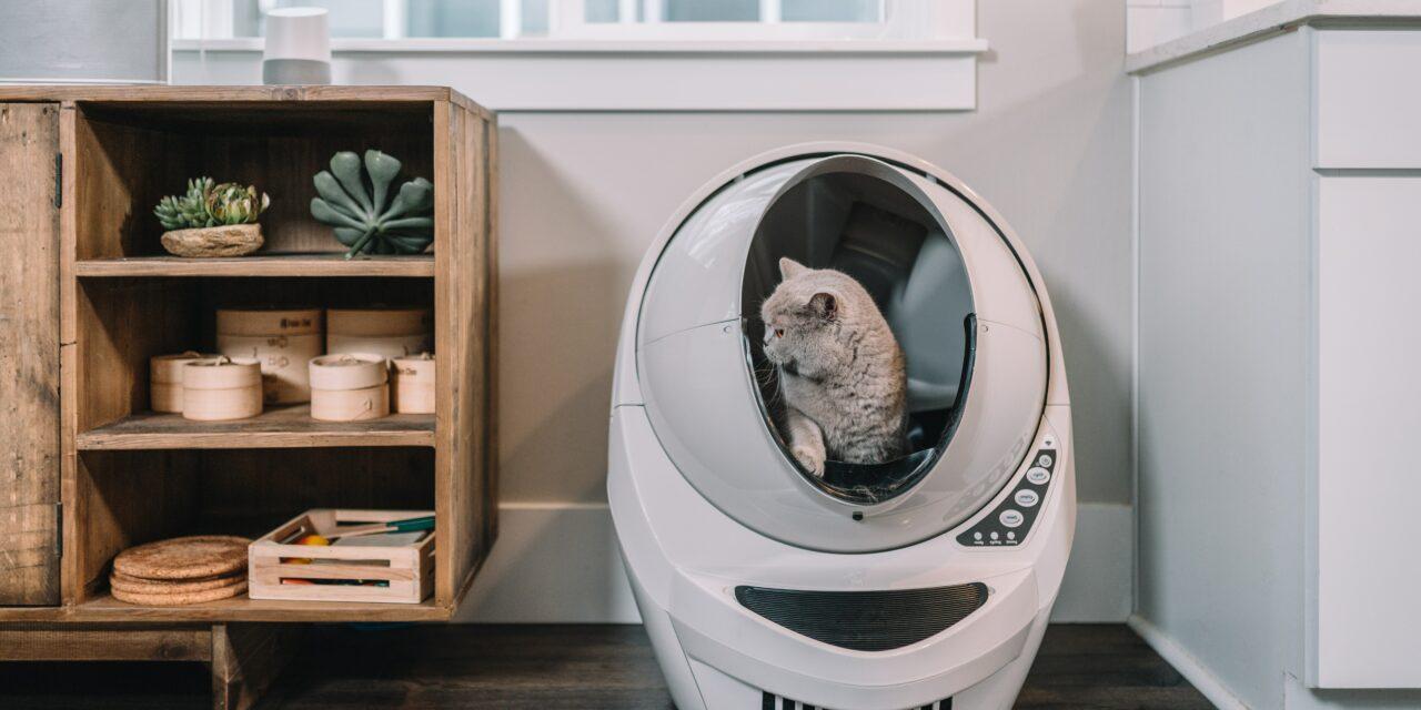 How often do cats poop?