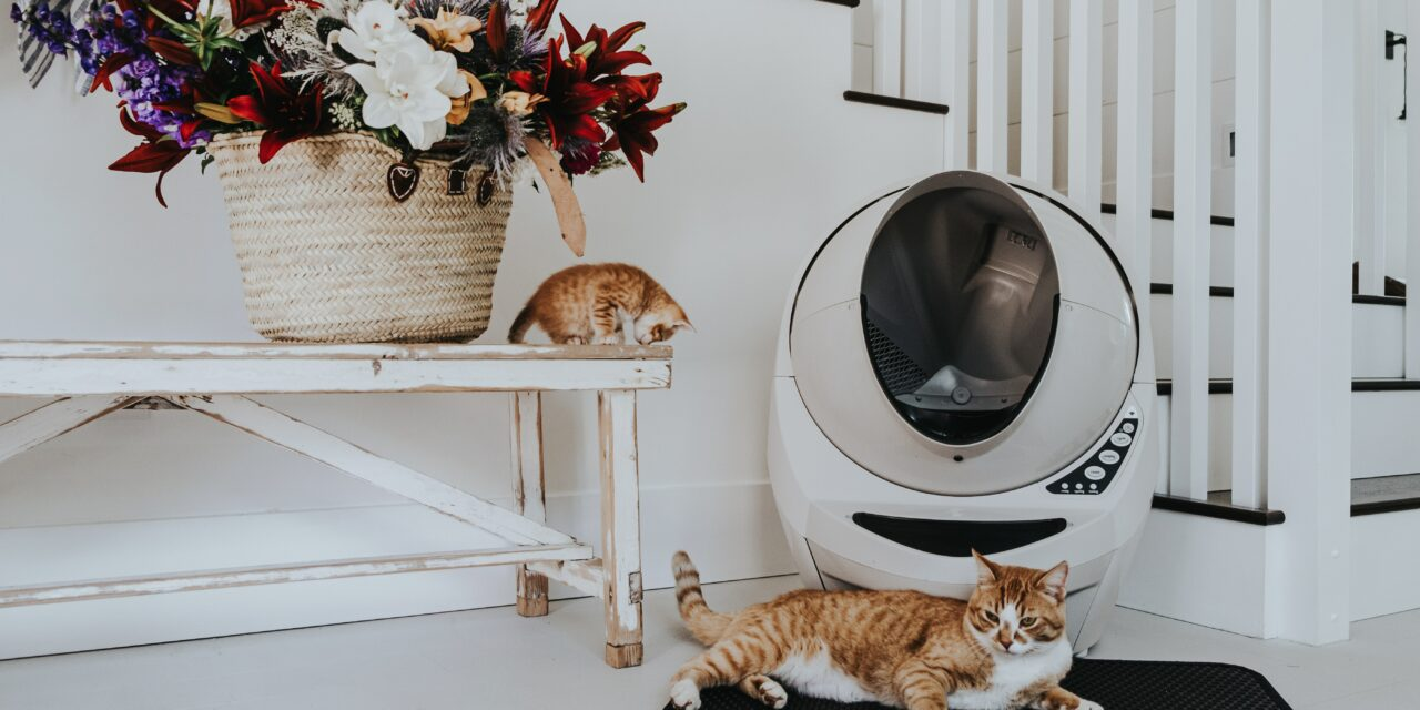 When do male cats start spraying?