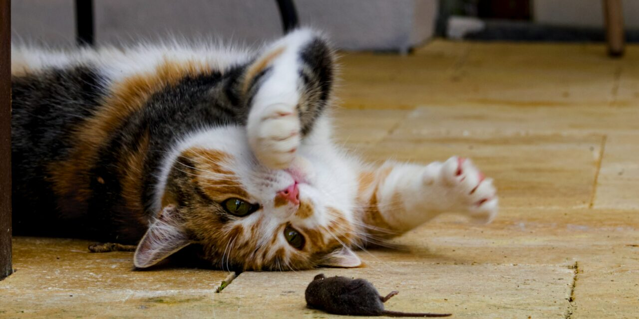 Why do cats bring you dead animals?